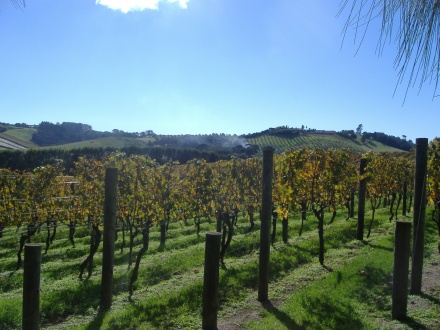 Vines at Te Moto, Waiheke Island